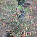south-pasadena-news-11-21-17-making-south-pasadena-more-beautiful-2